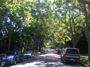trees 3rd ave