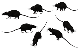 A Property Manager's Nightmare – There's a Rat in My Kitchen